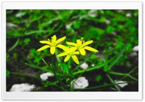 Iran Flowers