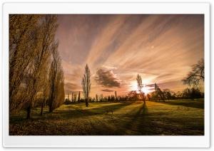 Poplars In The Sunset