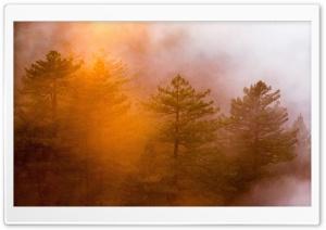 Fog Shrouded Forest