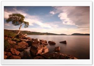 Tree & Lake