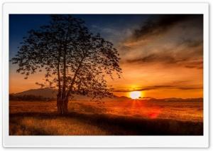 Malaysia Tree Sunset