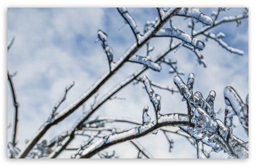 Download Branches Engulfed In Ice 2 UltraHD Wallpaper