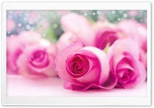 Light Pink Roses Bokeh