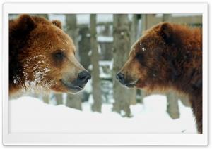Brown Bears Couple
