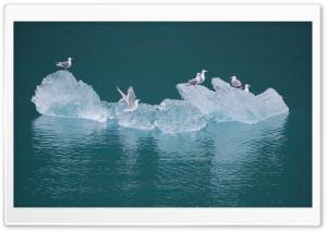 Seagulls on an Iceberg