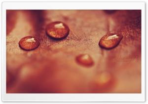 Autumnal Drops