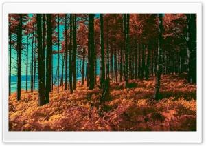 Orange Forest, Sea, Infrared...