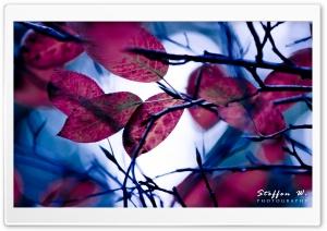 Purple Leaves, Bokeh
