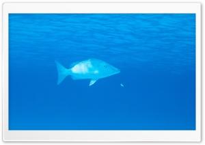 Pacific Ocean Animals