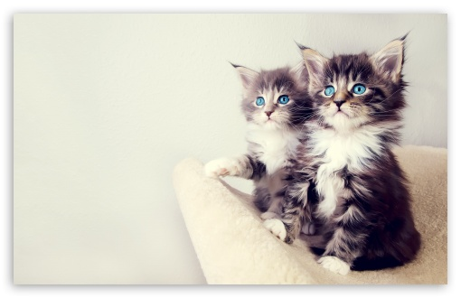 Download Cute Kittens UltraHD Wallpaper
