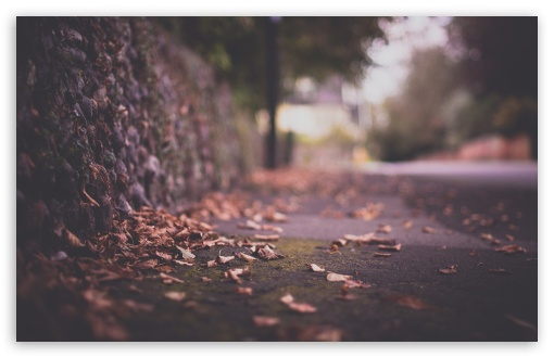 Download Autumn Leaves On Pavement UltraHD Wallpaper