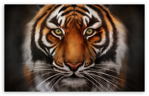 Download Save The Tiger UltraHD Wallpaper