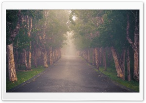 Cloud Forest, Road
