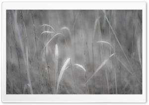 Grass Black And White