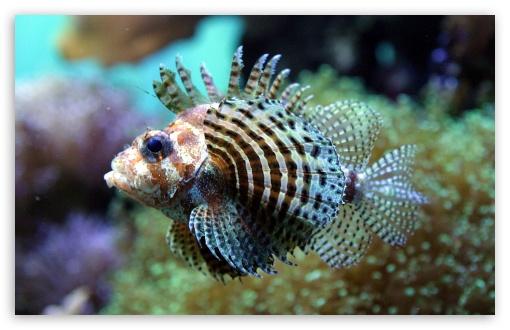 Download Exotic Fish 12 UltraHD Wallpaper