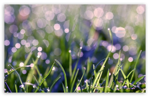 Download Grass With Morning Dew UltraHD Wallpaper