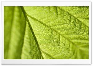 Leaf Texture Macro
