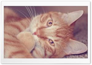 My Kitty