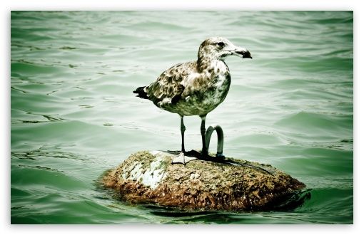 Download Seagull On A Buoy UltraHD Wallpaper