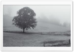 Tree, Foggy Morning, Black...