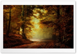Beautiful Autumn Landscape