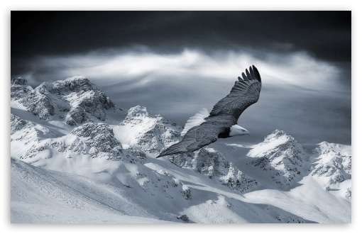 Download Bald Eagle Flying Over Mountains UltraHD Wallpaper