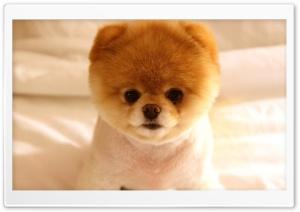 Cute Dog Boo