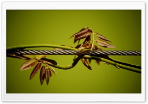 Wire And Plant