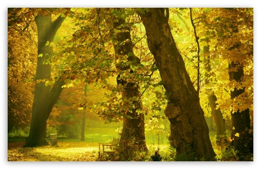 Download Golden Trees UltraHD Wallpaper