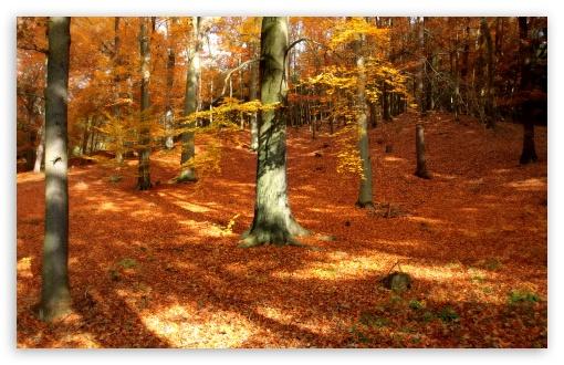 Download Autumn, Forest UltraHD Wallpaper