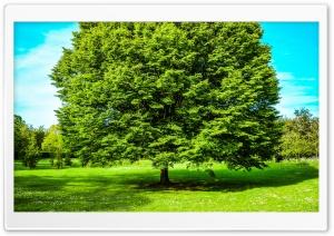 Green Tree, Spring