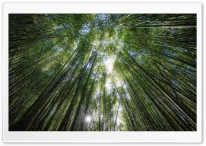 Bamboos, the Fastest growing...