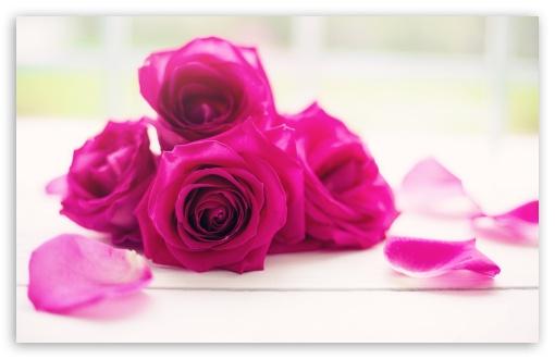 Download Roses Good Morning UltraHD Wallpaper