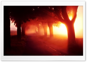 Red Sunset   Tree Lined Road