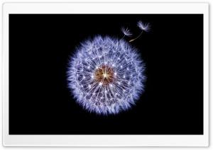 Dandelion Globular Head of...