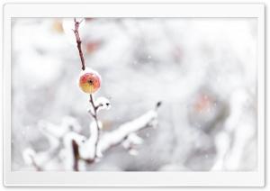 Frozen Apple, Winter
