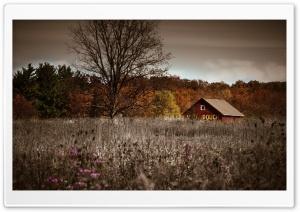 Weeds Field