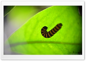 Caterpillar in a Leaf