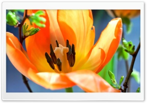Easter Flower Background 2016