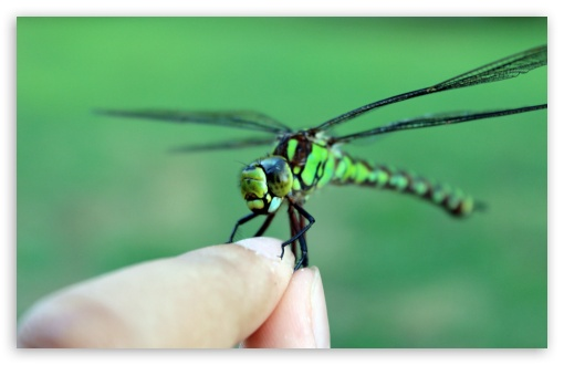 Download Dragonfly UltraHD Wallpaper