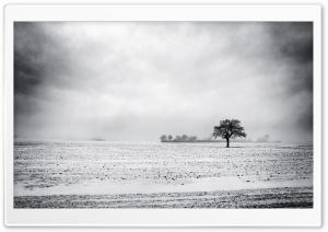 Empty Field, Winter