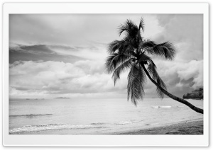 Coconut Tree Black and White