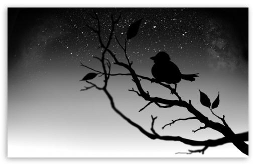 Download Black Bird UltraHD Wallpaper