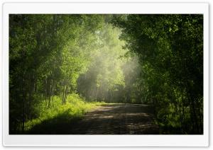 Road, Aspens Trees in...