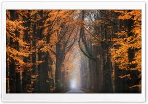 Road, Trees, Beautiful Autumn...