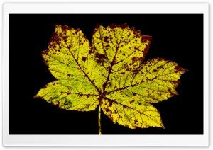 Rust Colored Leaf, Autumn