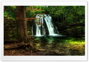Waterfall Forest
