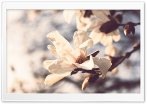 Pale Spring Flowers