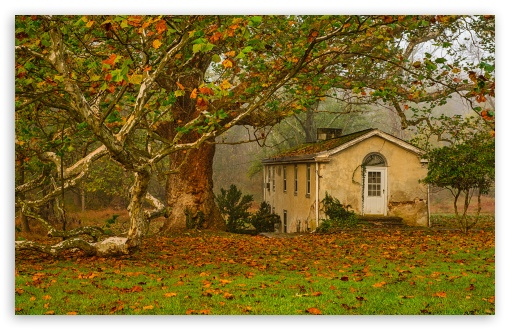 Download Autumn, Leaves, Big Tree, Old House UltraHD Wallpaper