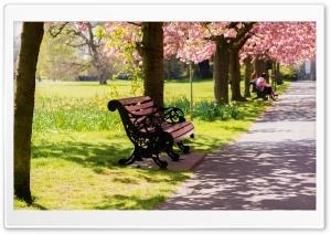 Bench Springtime